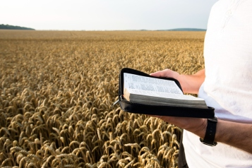 Man holding open Bible in a wheat field